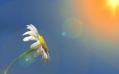 A flower cannot blossom without sunshine, neither can a man live healthy without Vitamin D